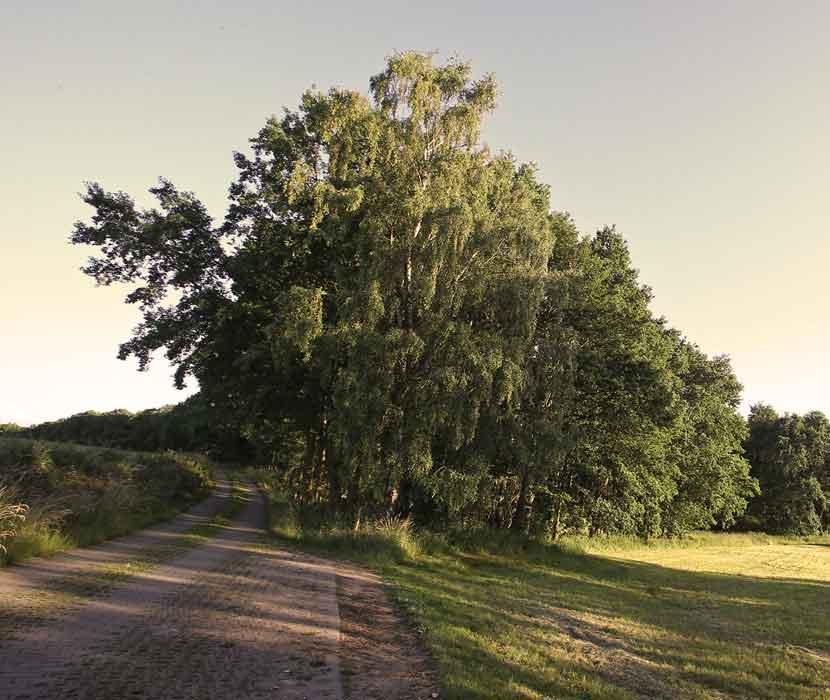 Zufahrtsweg zum Waldfriedhof Schönburger Land