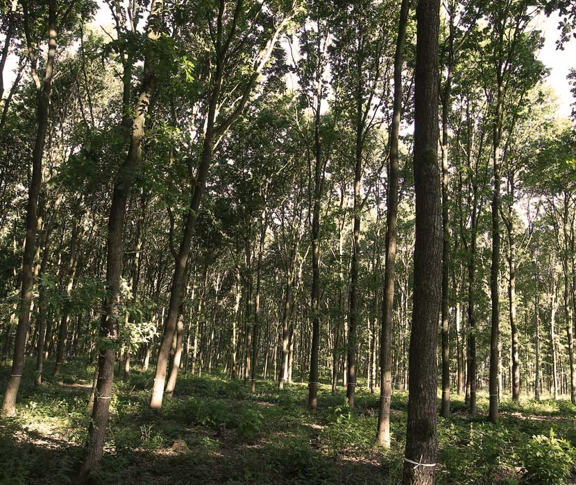 Bäume im Waldfriedhof