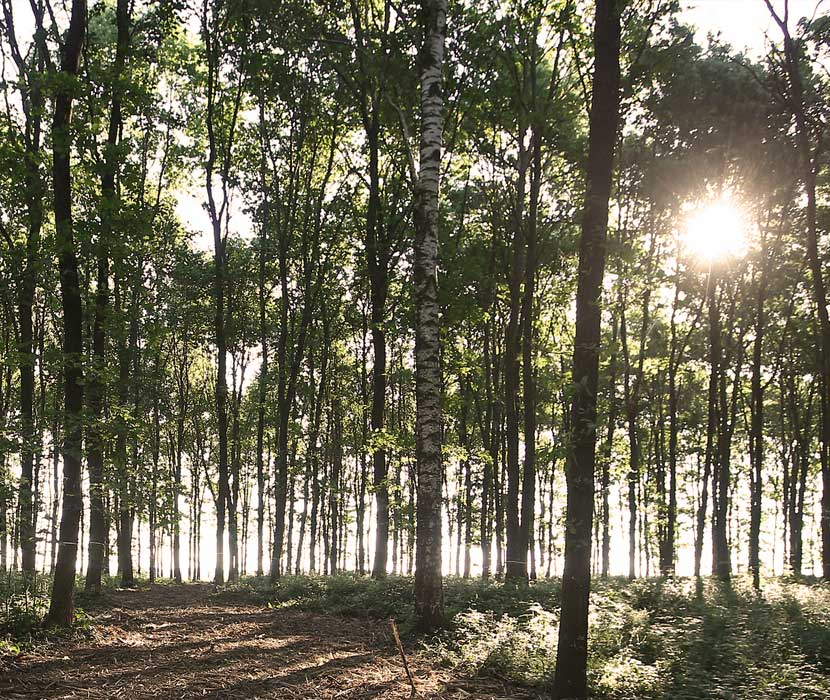Lichtdurchfluteter Urnenwald mit Baumgrabstätten