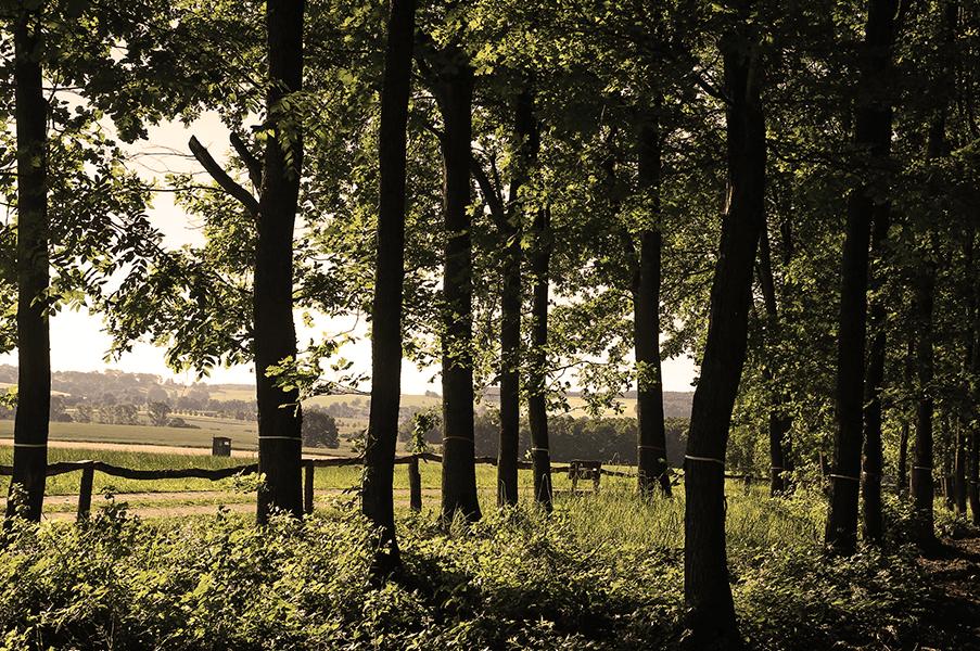 Herzlich Willkommen im Waldfriedhof Schönburger Land