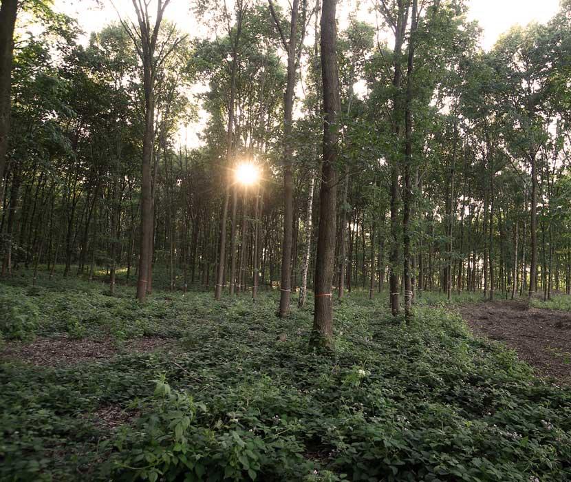 Strahlender Sonnenuntergang im Bestattungswald im Schönburger Land