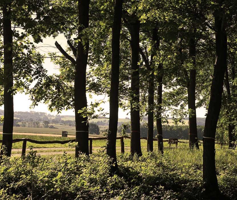 Blick vom Waldfriedhof Schönburger Land auf umgebende Felder und Wiesen