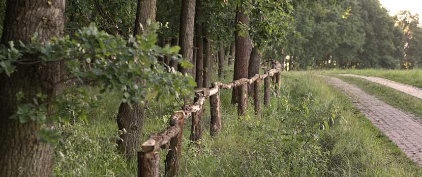 Zaun und Zufahrtsweg zum Bestattungswald