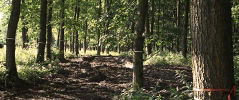 Bäume im Waldfriedhof mit Kennzeichnung
