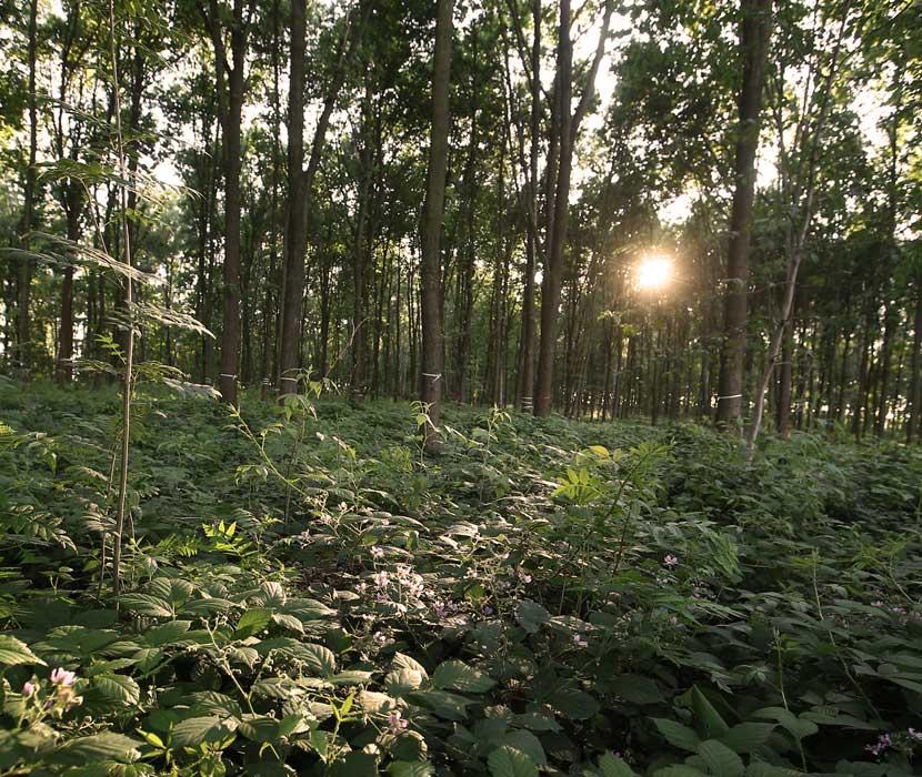 Dämmerung im Bestattungswald im Schönburger Land